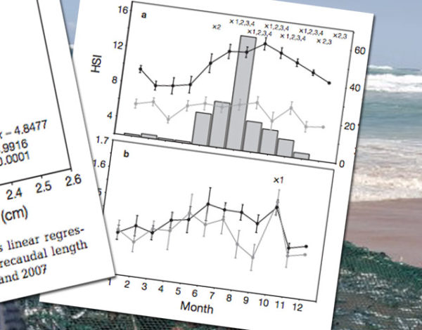 The condition conundrum: application of multiple condition indices to the dusky shark Carcharhinus obscurus