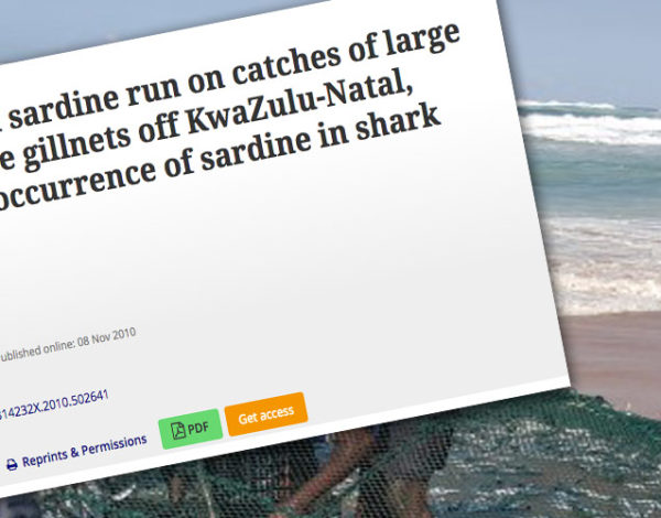 Influence of the annual sardine run on catches of large sharks in the protective gillnets off KwaZulu-Natal, South Africa, and the occurrence of sardine in shark diet