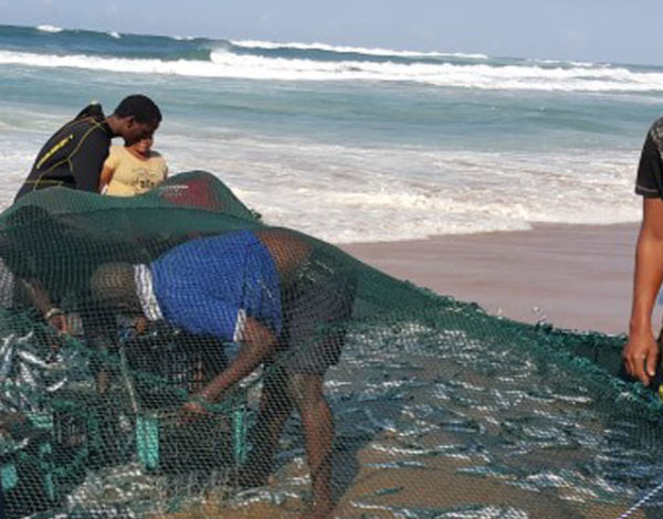 The annual sardine run – an experience not to be missed