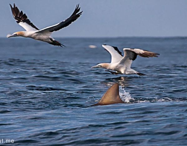 Travelers Diary: Head to the Kwa-Zulu Natal Coast to run with the sardines.